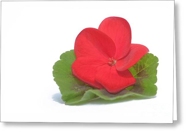 Red Geranium Greeting Card by Terri Waters