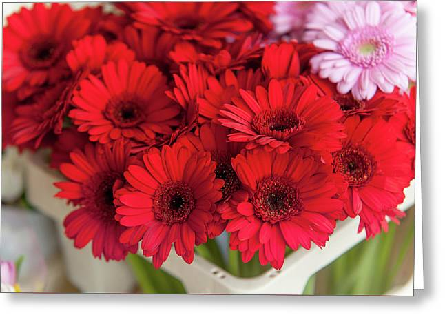 Red Gerberas At Amsterdam Flower Market Greeting Card by Jenny Rainbow