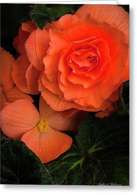 Red Giant Begonia Ruffle Form Greeting Card