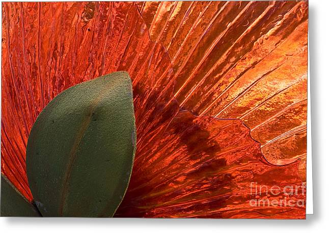 Red Glass Flower Greeting Card by Tim Hightower