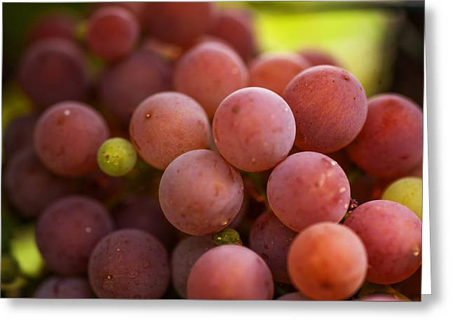 Red Grapes Close Up Greeting Card by Jenny Rainbow