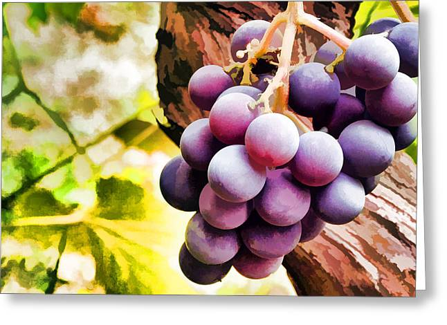 Red Grapes In The Vineyard With Boke Greeting Card