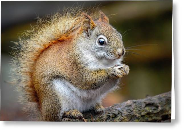 Red Ground Squirrel Greeting Card