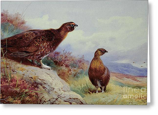 Red Grouse On The Moor, 1917 Greeting Card