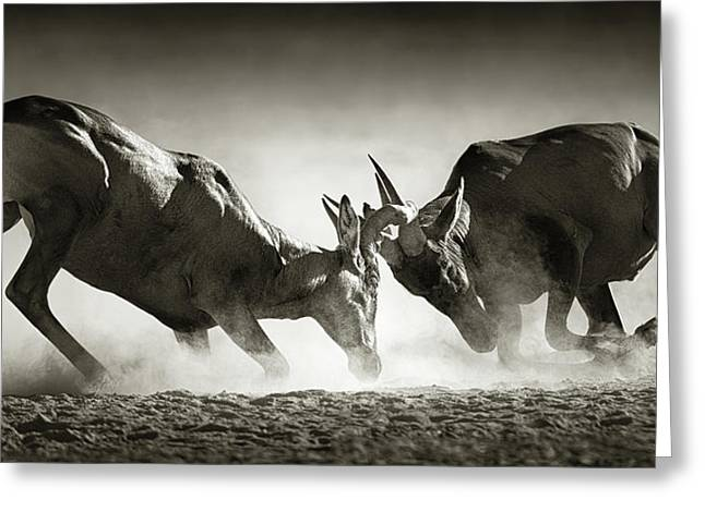 Red Hartebeest Dual In Dust Greeting Card