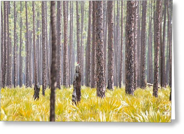 Saw Greeting Cards - Red-head in a sea of Palmetto Greeting Card by Maili Page