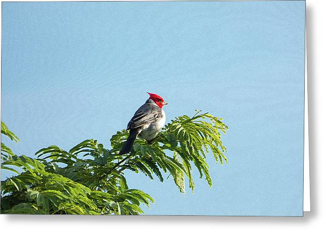 Red-headed Cardinal On A Branch Greeting Card