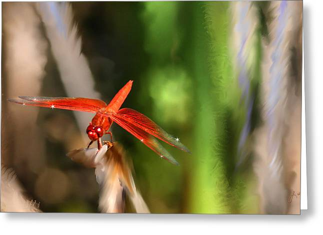 Red Heart Dragonfly Greeting Card