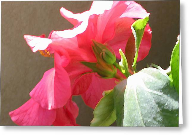 Red Hibiscus Beauty Greeting Card