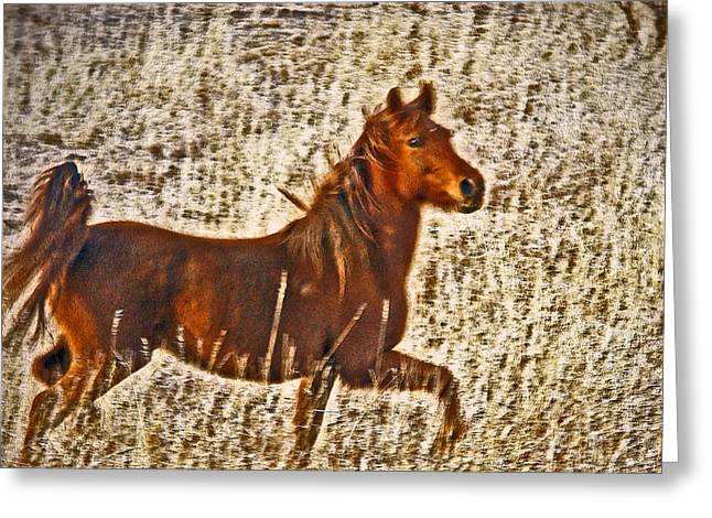 Horse In Field Greeting Cards - Red Horse Art Greeting Card by James Steele