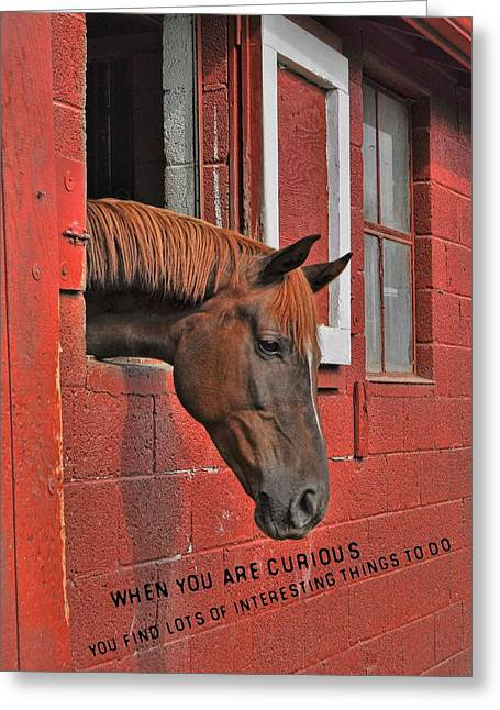 Red Horse Quote Greeting Card