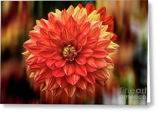 Red Hot Dahlia Greeting Card