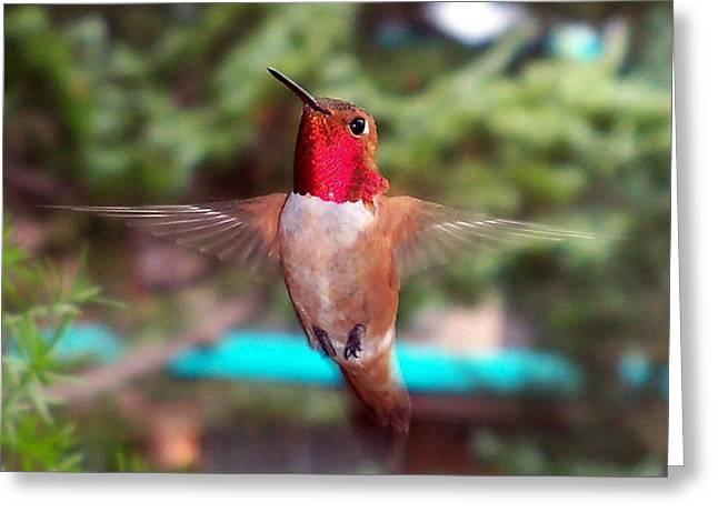 Red Hummingbird Greeting Card by Joseph Frank Baraba