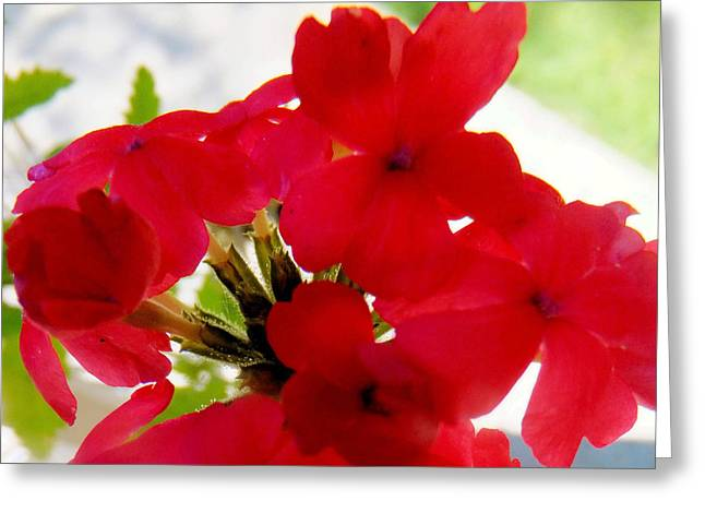 Red In The Garden Greeting Card by Carolyn Repka