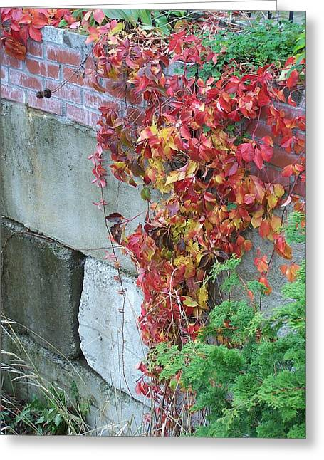 Red Ivy Greeting Card by Gene Ritchhart