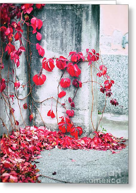 Greeting Card featuring the photograph Red Ivy Leaves by Silvia Ganora