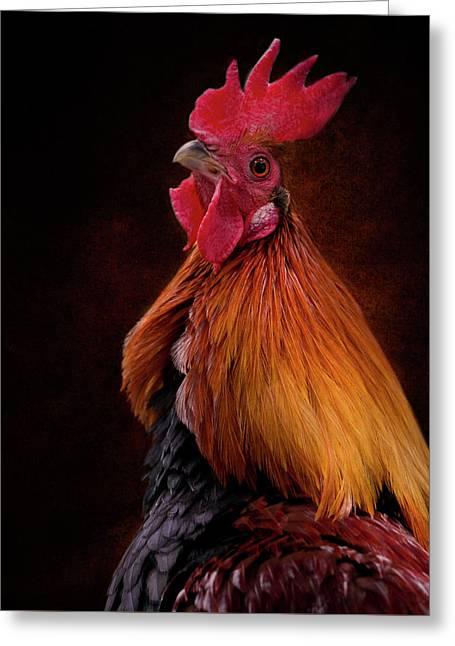 Red Jungle Fowl Rooster Greeting Card