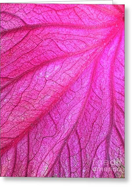 Red Leaf Arteries Greeting Card