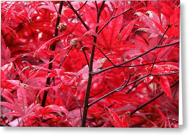 Red Leaves And Stems 2 Pd Greeting Card by Lyle Crump