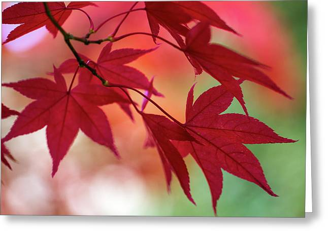 Greeting Card featuring the photograph Red Leaves by Clare Bambers