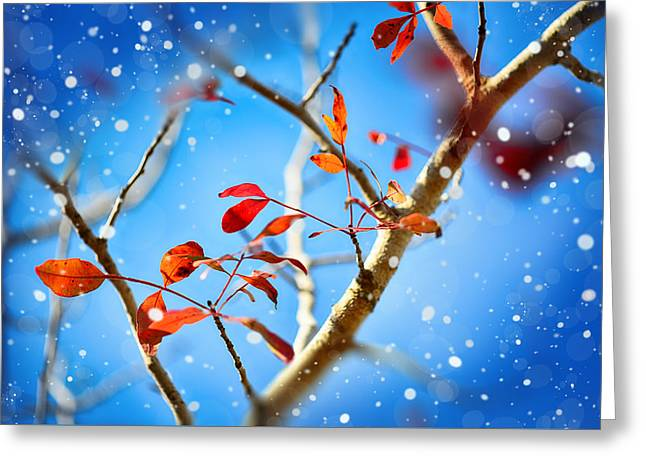Red Leaves On Blue Background Greeting Card