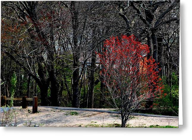 Red Leaves On Tree Greeting Card by Robert Scauzillo