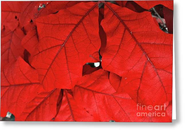 Red Leaves  Greeting Card by Rachel Hannah