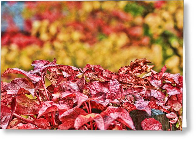 Greeting Card featuring the photograph Red Leaves by Sergey and Svetlana Nassyrov