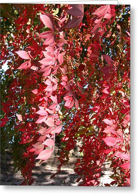 Red Leaves Greeting Card by Susan Boyes