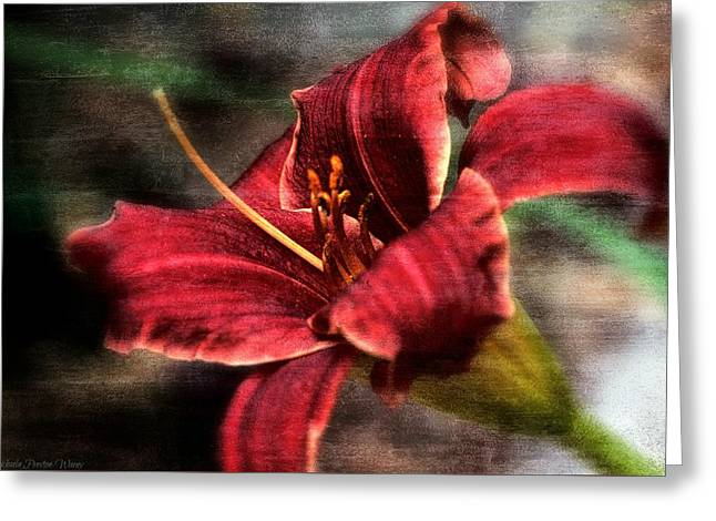 Greeting Card featuring the photograph Red Lilly by Michaela Preston