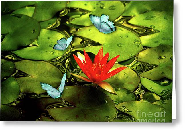Red Lily And Butterflies Greeting Card