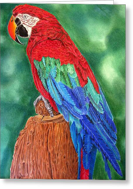 Dawnstarstudios Greeting Cards - Red Macaw Greeting Card by Dawnstarstudios