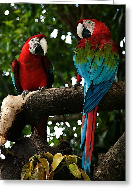 Red Macaws Greeting Card by Bibi Romer