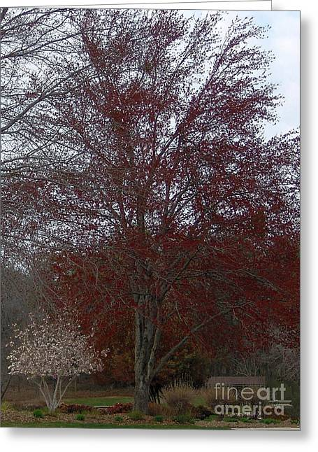 Red Maple Greeting Card