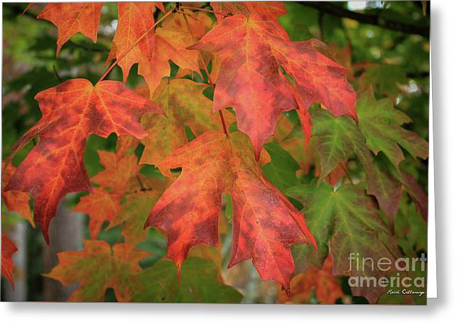 Red Maple Eye Magnets Fall Leaf Art Greeting Card by Reid Callaway