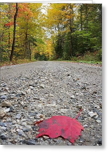 Red Maple Leaf On Vermont Backroad Greeting Card