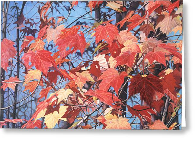 - Harlan Greeting Cards - Red Maples Greeting Card by - Harlan