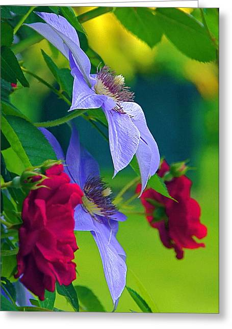 Red Meets Lavender Greeting Card