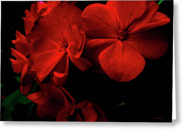 Red  Midnight Magic Flowers Greeting Card