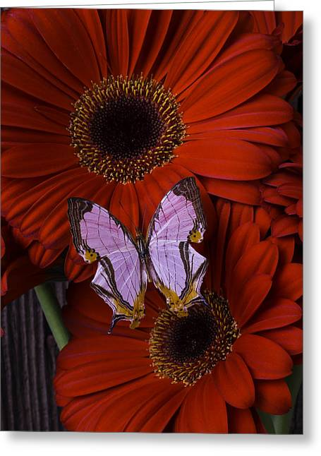 Red Mums With Exotic Butterfly Greeting Card by Garry Gay