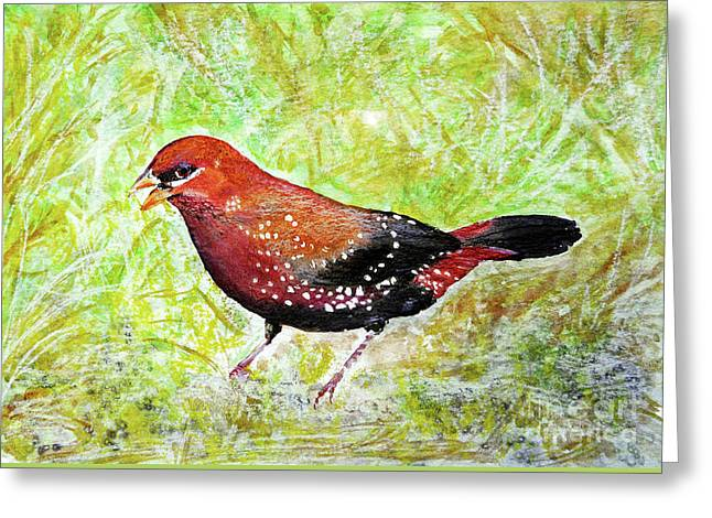 Red Munia Greeting Card
