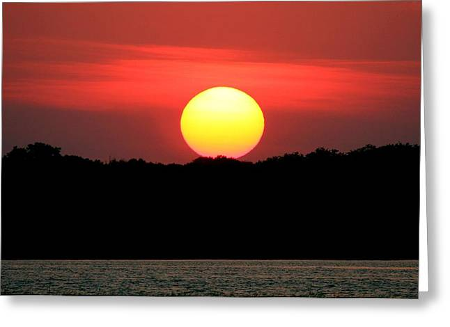 Red Myakka Sunset Greeting Card by Myrna Bradshaw