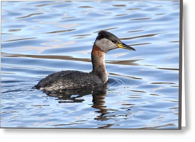 Red-necked Grebe Greeting Card