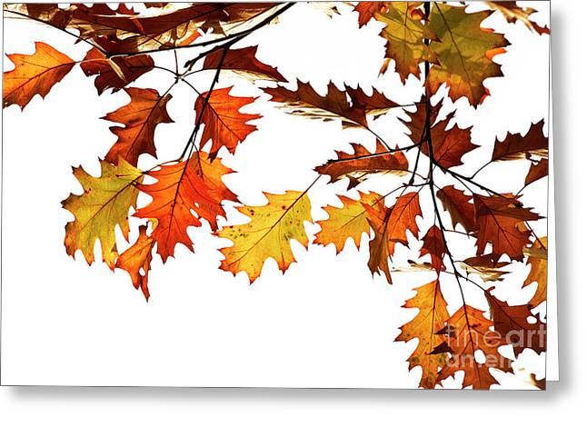 Red Oak Leaves In Fall Greeting Card by Tim Gainey