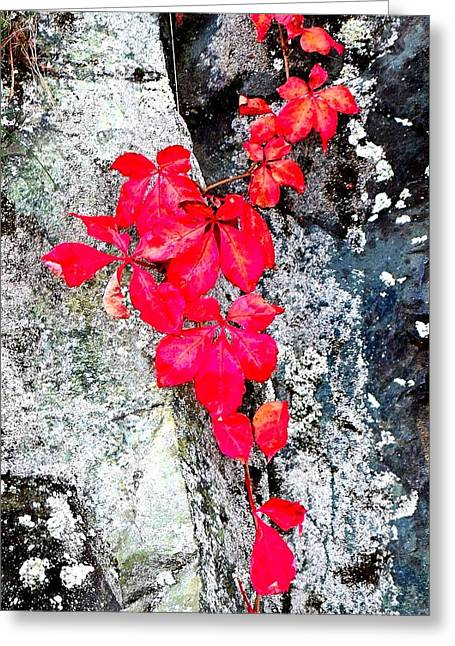 Red On Rock Greeting Card by Carlos Romero