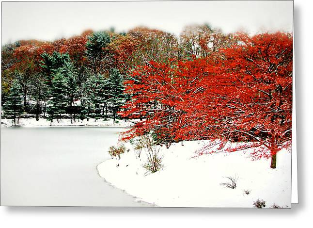 Red On White Greeting Card by Diana Angstadt