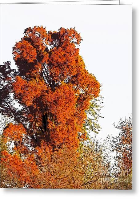 Red-orange Fall Tree Greeting Card