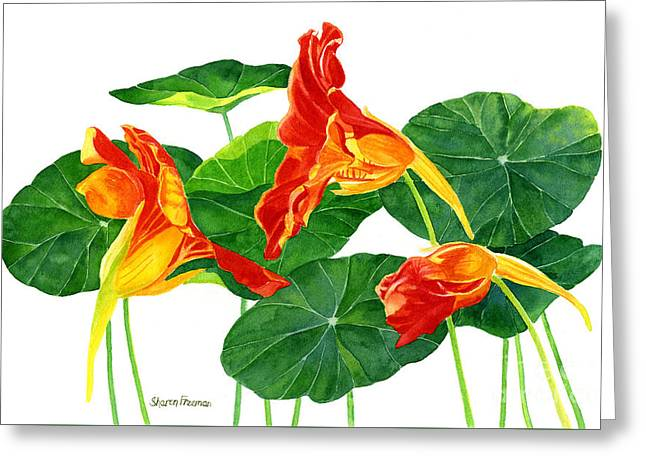 Red Orange Nasturtiums With Leaves Greeting Card by Sharon Freeman