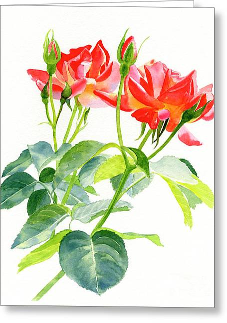 Red Orange Rose Blossoms With Buds Greeting Card
