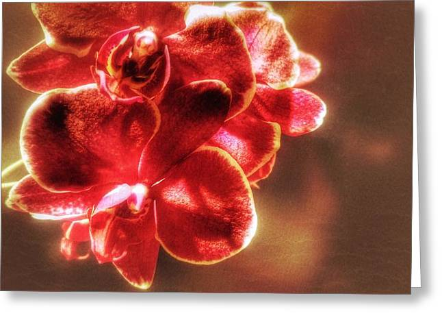 Greeting Card featuring the photograph Red Orchid by Isabella F Abbie Shores FRSA